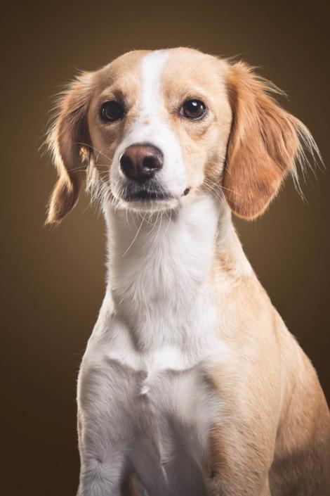 Süße Hundefotos
