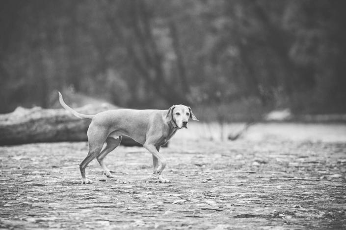 Hundefotografie Paul Günther