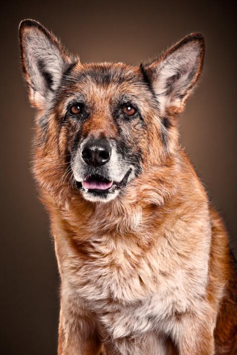 Hunde Foto München