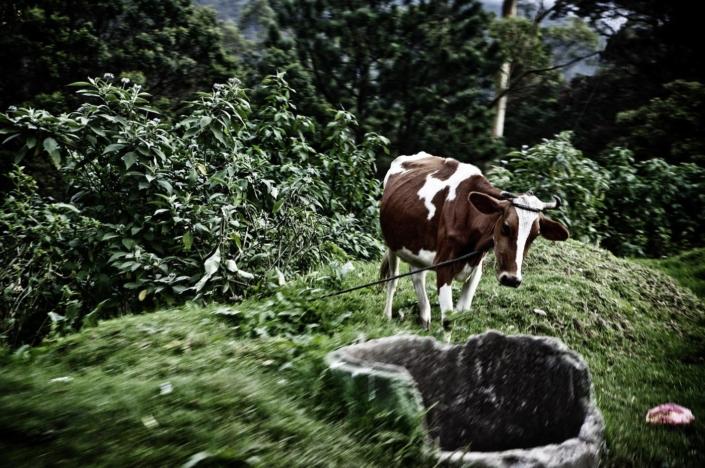 Reise, Fotografie, Bilder, Sri Lanka