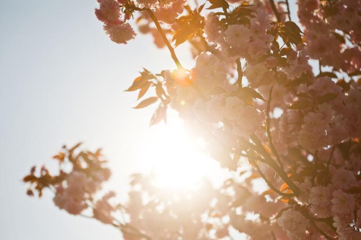 Blueten Baum Sonne Gegenlicht