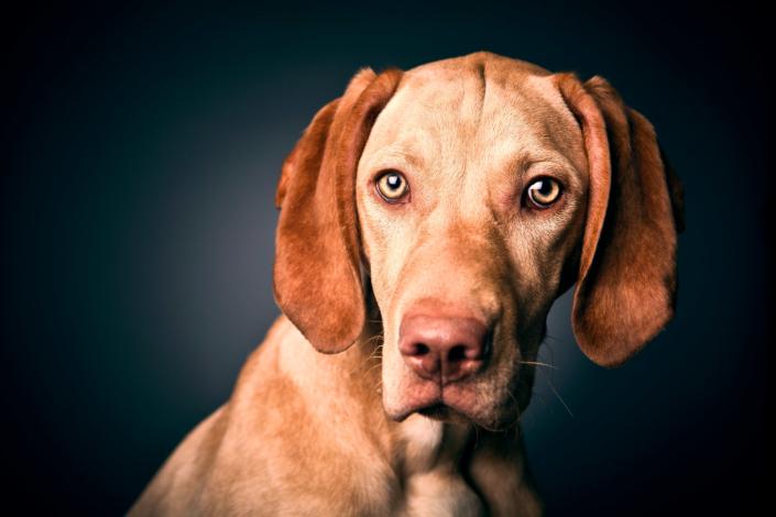 Hundeportrait Paul Günther