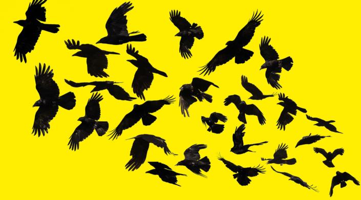 Rabe Kraehe Schwarz Gelb Kunst