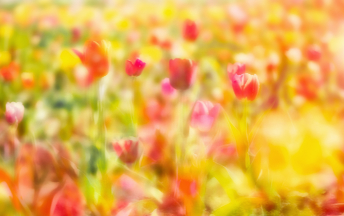 Tulpen Blumen Bunt